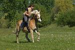 Frau reitet Haflinger / woman rides haflinger horse