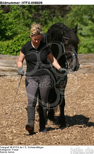 Frau f�hrt Friese / woman with friesian horse / HTFA-008609
