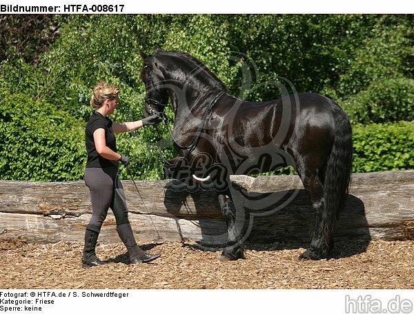 Frau trainiert Friese / woman trains friesian horse / HTFA-008617