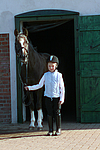Deutscher Reitpony Hengst / pony stallion