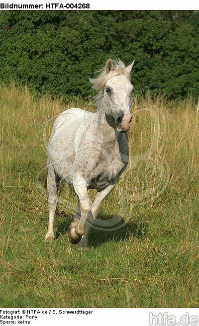 Pony / HTFA-004268