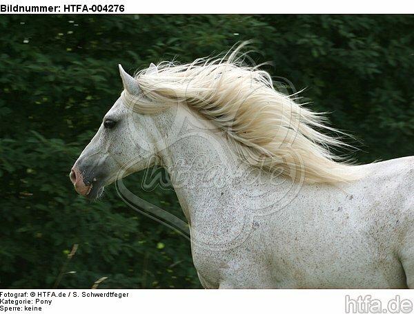 Pony / HTFA-004276