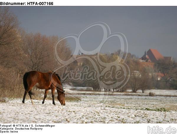 Deutsches Reitpony / pony / HTFA-007166
