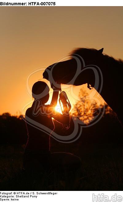 Shetland Pony / HTFA-007075