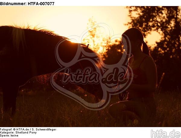Shetland Pony / HTFA-007077