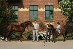 Deutsches Reitpony und Shetland Pony / ponys