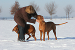Frau mit Rhodesian Ridgebacks / woman with Rhodesian Ridgebacks
