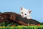 K�tzchen / kitten